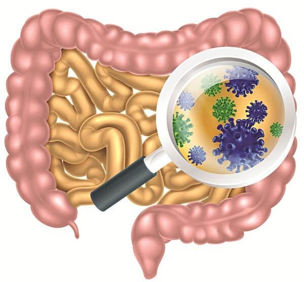 Ký sinh trùng gây nhiễm trùng đường tiêu hóa